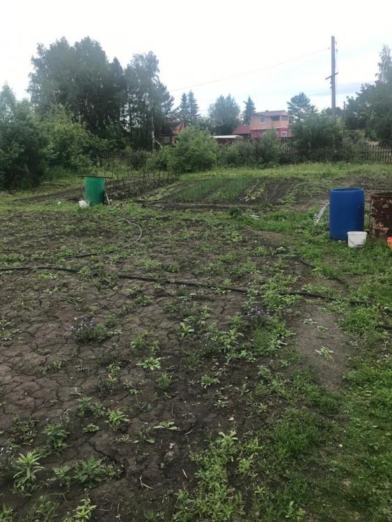 Омская область, Омск, СНТ Зеленый берег, 160 7